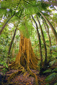 Tropikal yağmur ormanları — Stok fotoğraf
