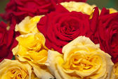 Assorted Roses — Stock Photo