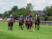 York horse race — Stock Photo
