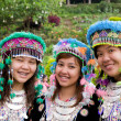 hmong hill tribe girls — Stock Photo