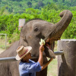 Trainer Feeding an Elephant — Stock Photo