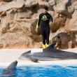 Stock Photo: Dolphin Show at Loro Parque