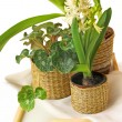 Group of houseplants on a white background — Stock Photo