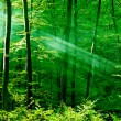 Photo: Lights of the morning forest