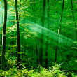 Lights of the morning forest — 图库照片