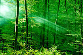 Lights of the morning forest — Stock Photo