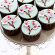 Cherry blossom cupcakes — Stock Photo #9373139