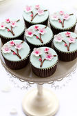 Cherry blossom cupcakes — Stock Photo