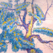 Old tree buckthorn -  