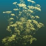 Постер, плакат: Flowering Herbs