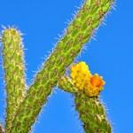 Постер, плакат: Flowering cactus in the sky