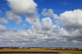 Fields of many colors and sky in Holland — Stock Photo