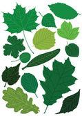 Jarní listí — Stock vektor