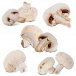 Mushroom — Stock Photo #9884100