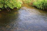 The rapid stream — Stock Photo