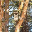 Stock Photo: Birdhouse on a pine tree in the forest