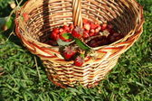 Basket of berries — Stock Photo