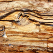 Rotten dried wood - Stock Photo