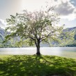 Tree — Stock Photo #10730212