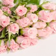 Pink roses — Stock Photo #8911306