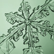 The maximum increase- snowflake — Stock Photo