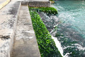 Moss covered steps near Grand Canal — Stock Photo