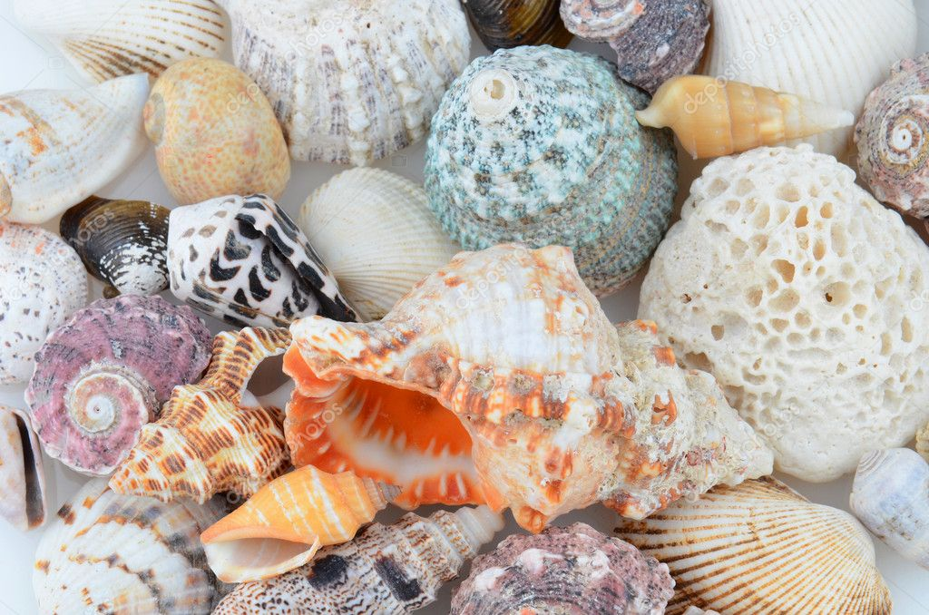 Closeup of a group of seashells. Many different varieties.  Stock Photo #10378194