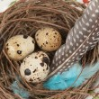Quail eggs — Stock Photo #10029998