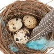 Quail eggs — Stock Photo #9761519
