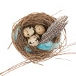 Quail eggs — Stock Photo #9812095