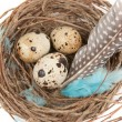 Quail eggs — Stock Photo #9812108