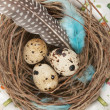 Quail eggs — Stock Photo #9857452