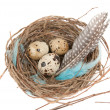 Quail eggs — Stock Photo #9877559
