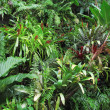 Tropical Forest Flora Background — Stock Photo