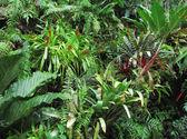 Tropical Forest Flora Background — Stock fotografie