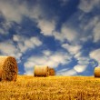 Hay or Straw Bales. — Stock Photo