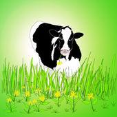 Vacas leiteiras em um campo verde. — Foto Stock