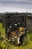 Cat by a graveside. — Stock Photo