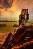 Owl sitting on woodbark. — Stock Photo
