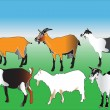 Stock Vector: Goats collection