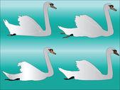 Colección cisne blanco — Vector de stock