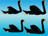Siyah kuğu koleksiyonu — Stok Vektör