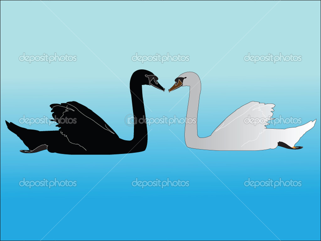 White and black swan - vector — Stock Vector #9932537