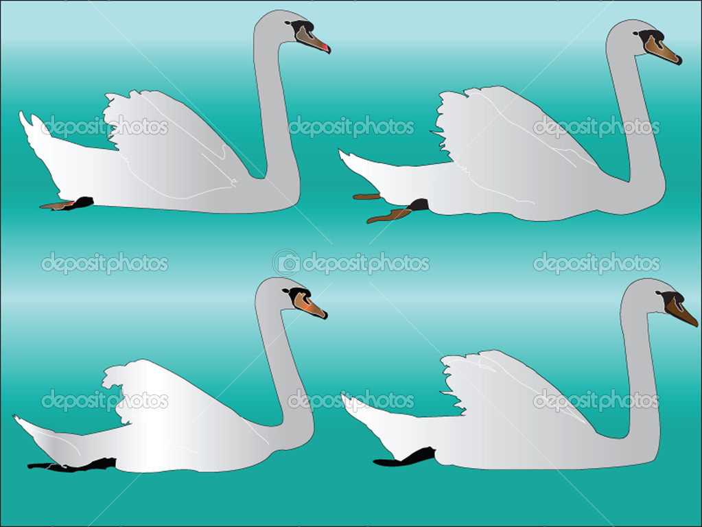 White swan collection - vector — Stock Vector #9933693