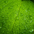 Raindrops on a green leaf — Stock Photo