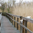 nature boardwalk at the north carolina outer banks — Stock Photo
