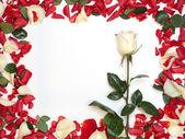 Cornice di petali — Foto Stock