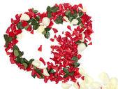 Heart of the petals — Stock Photo