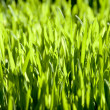 Stock Photo: Spring green glade