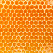 Beer honey in honeycombs. — Stock Photo #10040851